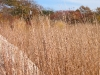 Bluestem Meadow